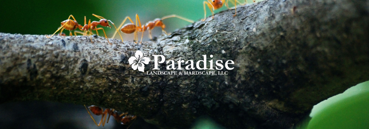 Ants in Annapolis Maryland and Pest Control