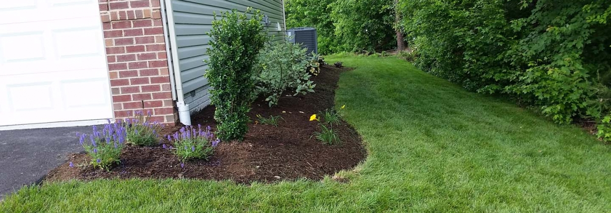 lawn care grass cutting