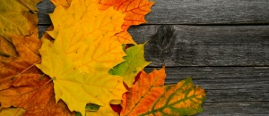 Leaf Removal services in Annapolis MD