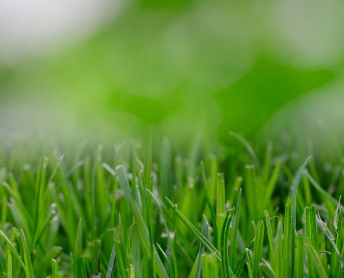 Grass Cutting Services Annapolis Landscaping