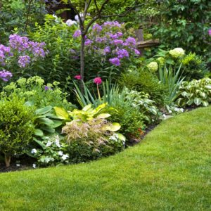 Lawn Mowing Services in Annapolis, Green grass